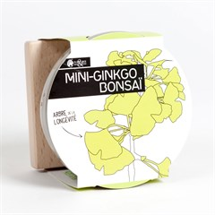 Mini-Gingko bonsaï