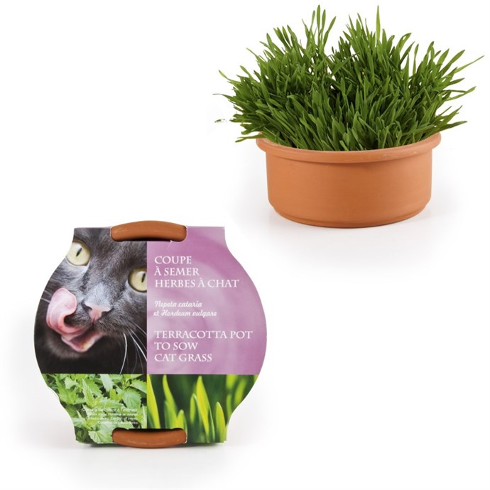 Coupelle de semis herbe chat nature d couvertes - Deco jardin nature et decouverte grenoble ...