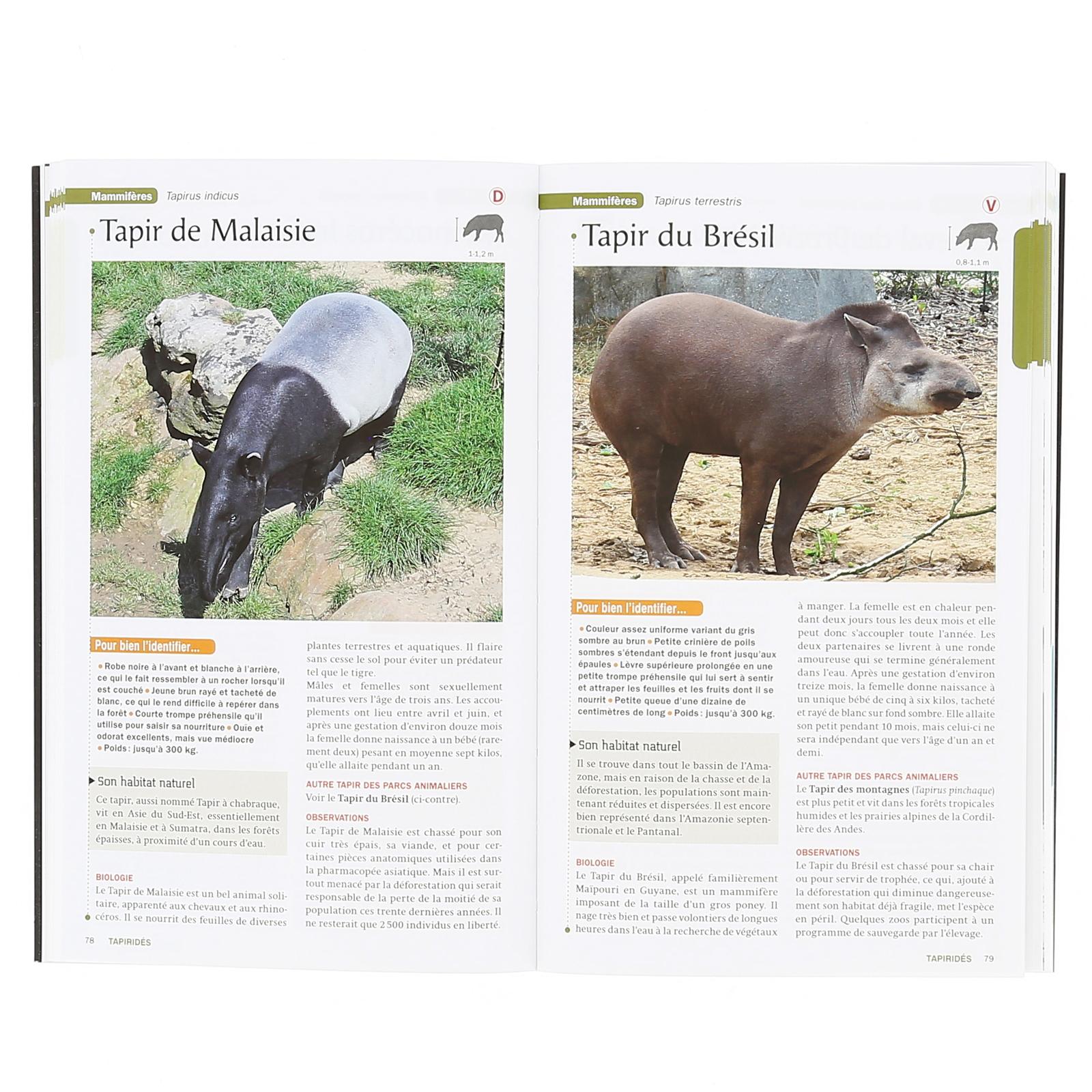 Coloriage Bebe Tapir.Guide Des Animaux Parcs Animaliers Nature Decouvertes