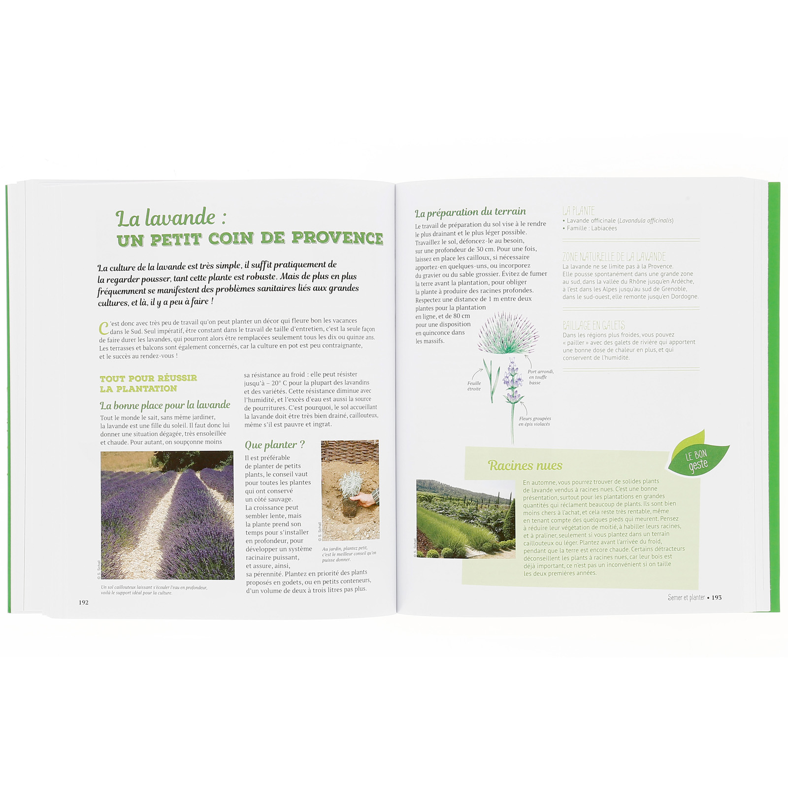Plantes Aromatiques Sur Terrasse la bible des plantes aromatiques