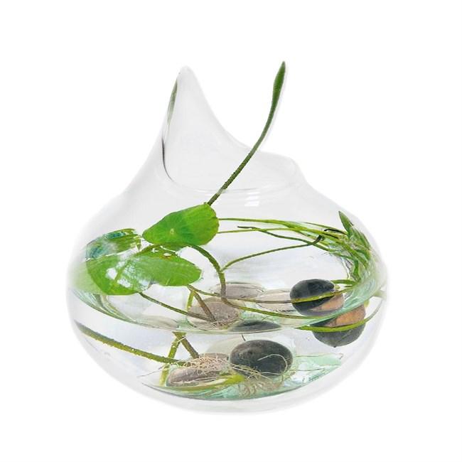 Goutte de lotus | Nature & Découvertes