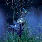 Bouquet solaire