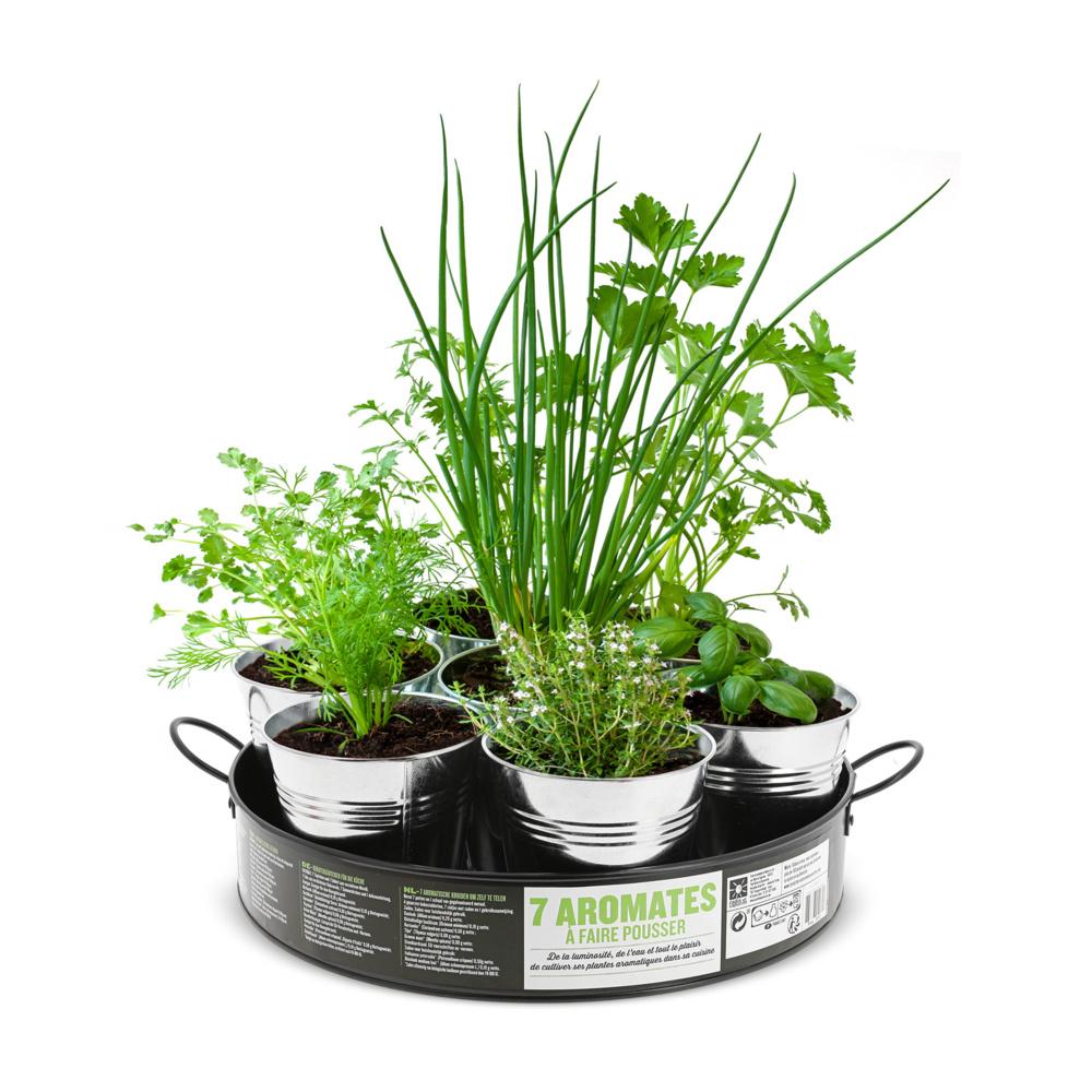 Planter Menthe En Pot plateau de 7 aromates à cultiver