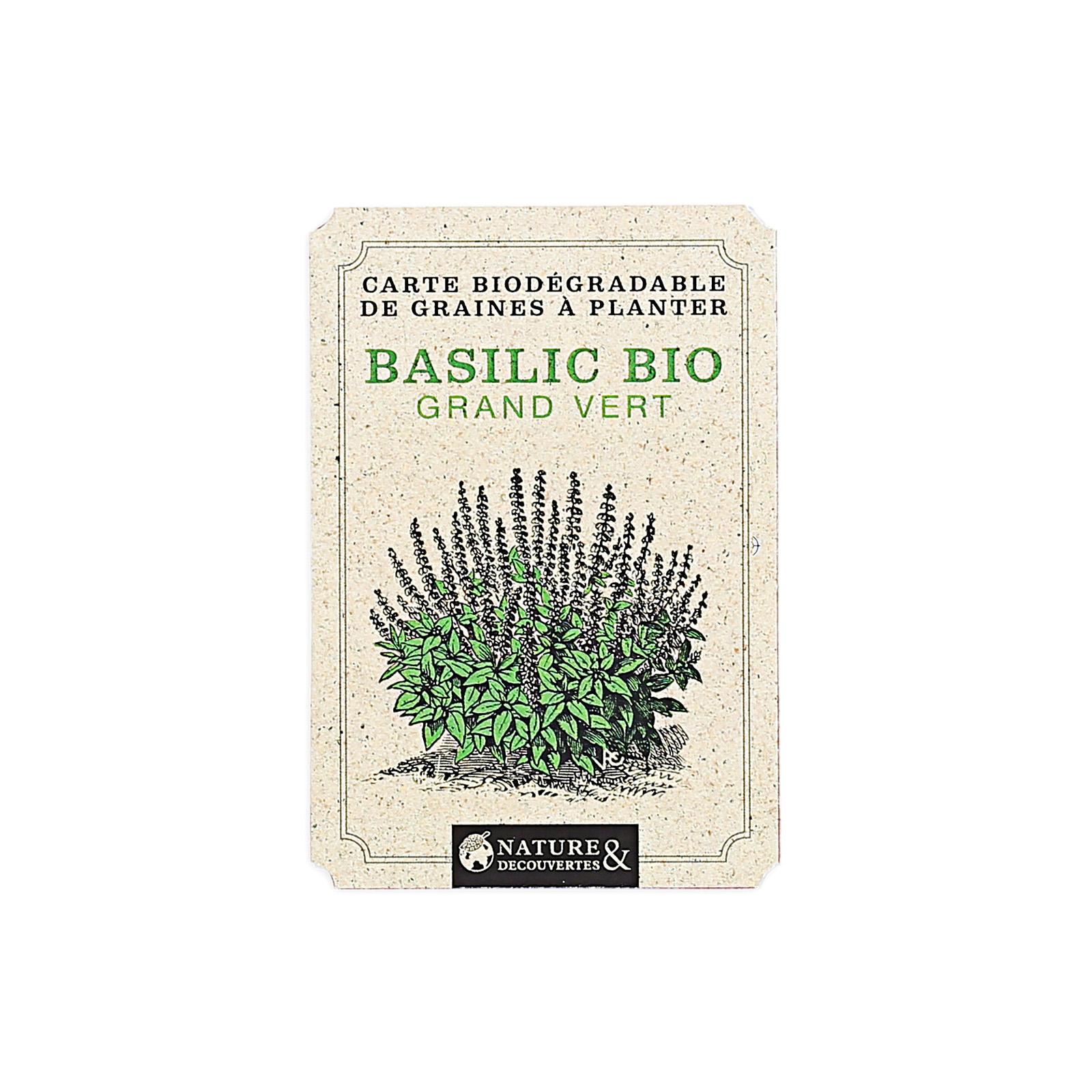 Comment Planter Du Basilic carte graines basilic bio à planter