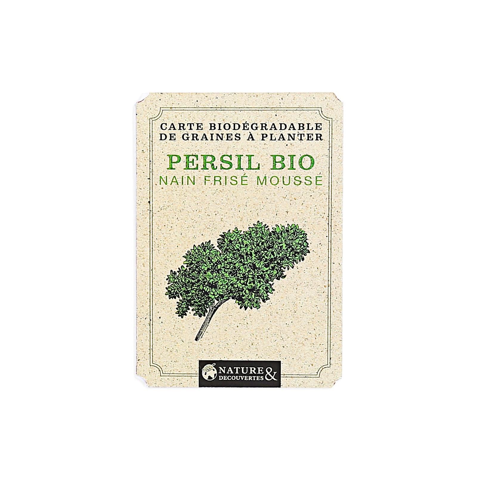Comment Planter Les Graines De Persil carte graines de persil bio