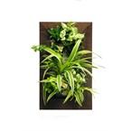 Cadre wallflower m vertical 58x31 cm