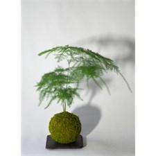 plante grasse nature et decouverte