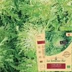 Chicoree scarole bubikopf 3 bio