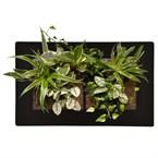 Cadre végétal médium paysage - noir - 30