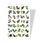 Poster nature feuilles
